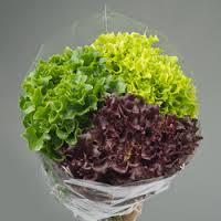 Multi-color salade - Lovendegem Online